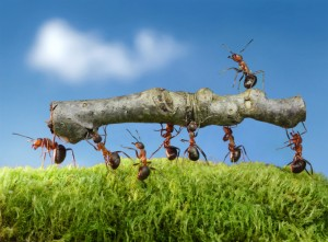 Ant Control-Pest Control Leicester