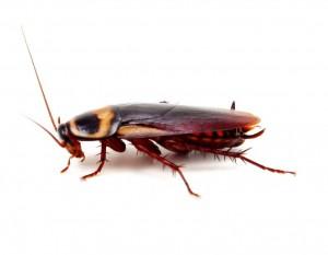 Pest Control Leicester 247