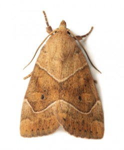 Moth Removal-Pest Control Leicester