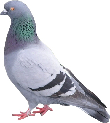 Pigeon Proofing-Pest Control Leicester